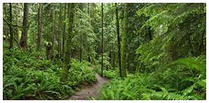 Trail, Mt. Chuckanut