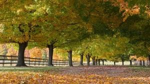 Autumn, rural Missouri